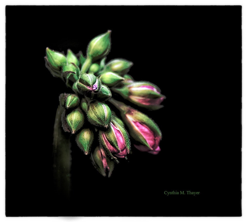 Photograph More Flora by Cynthia Mathre Thayer on 500px