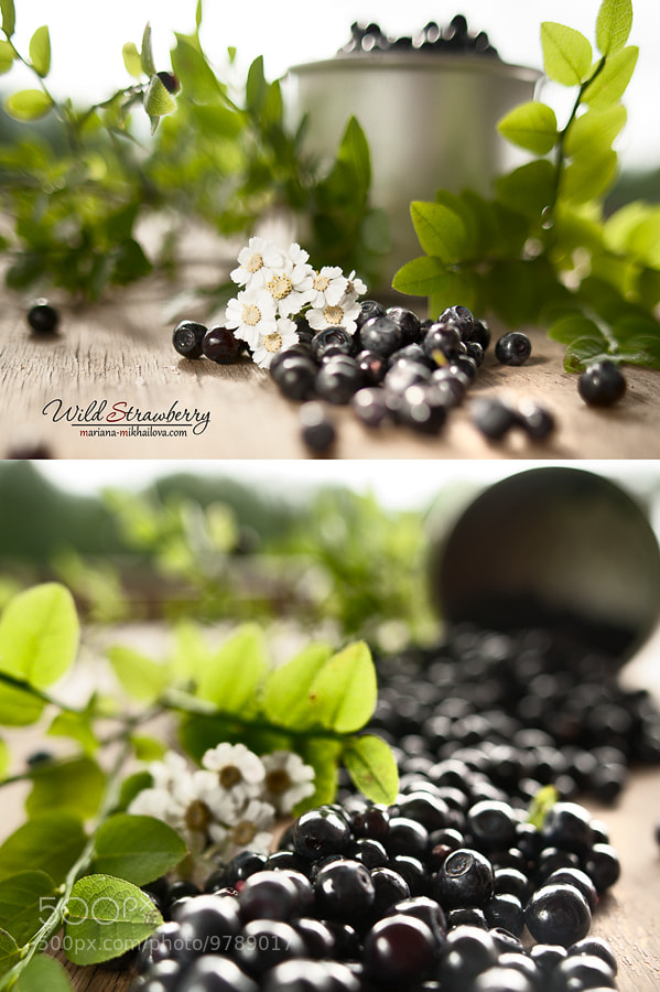 Photograph bilberry by Mariana Mikhailova on 500px