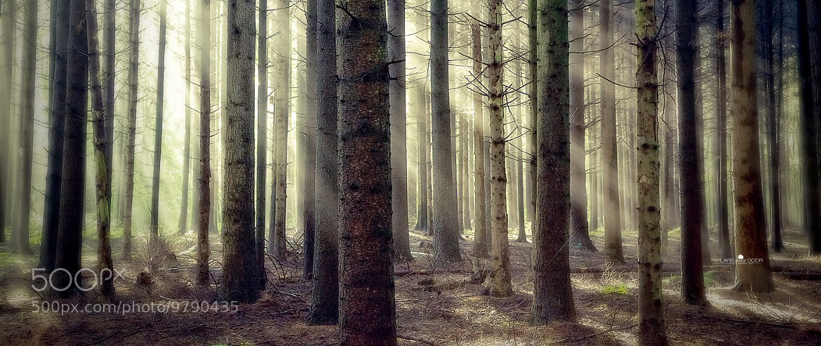 Photograph G-morning by Lars van de Goor on 500px