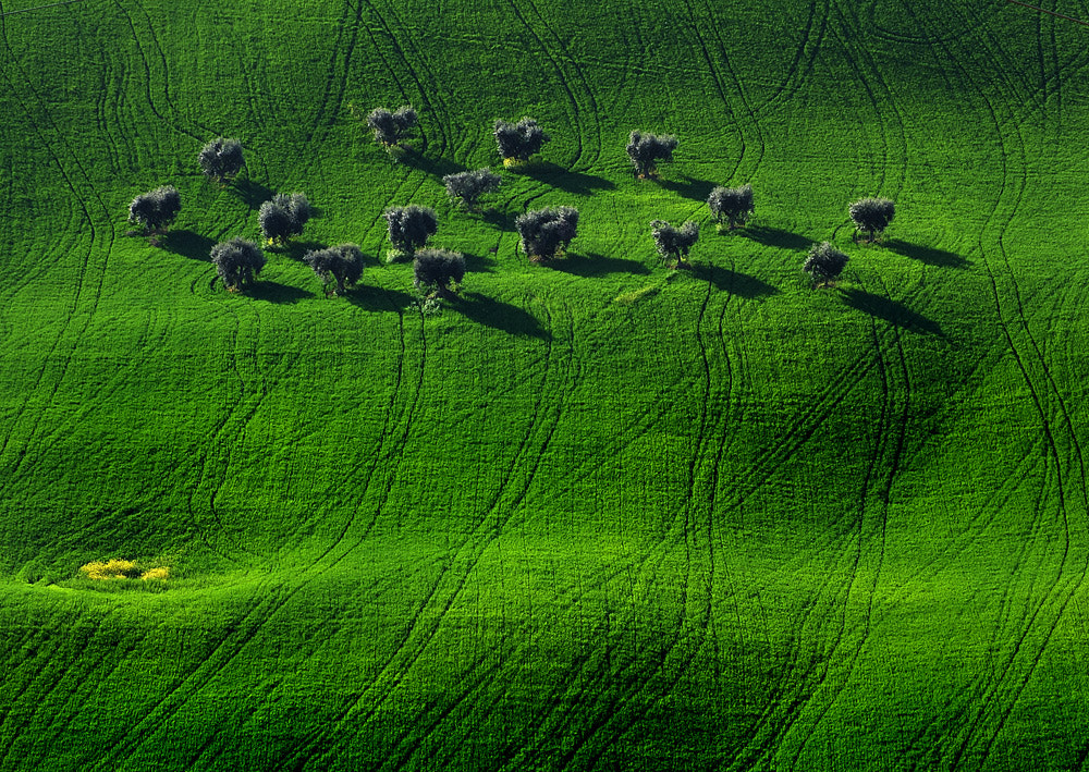 Photograph everything green by ivo pandoli on 500px