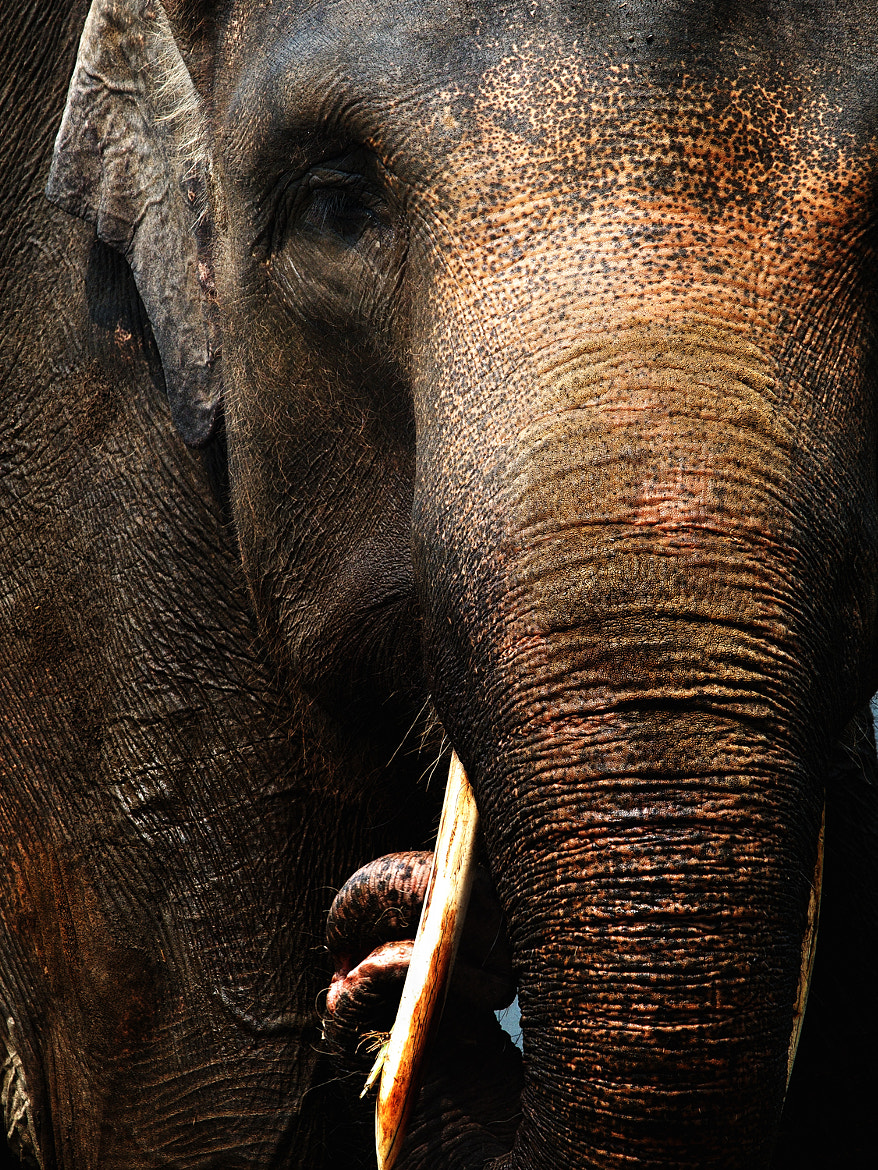 Photograph Big mammals by Henry Sudarman on 500px