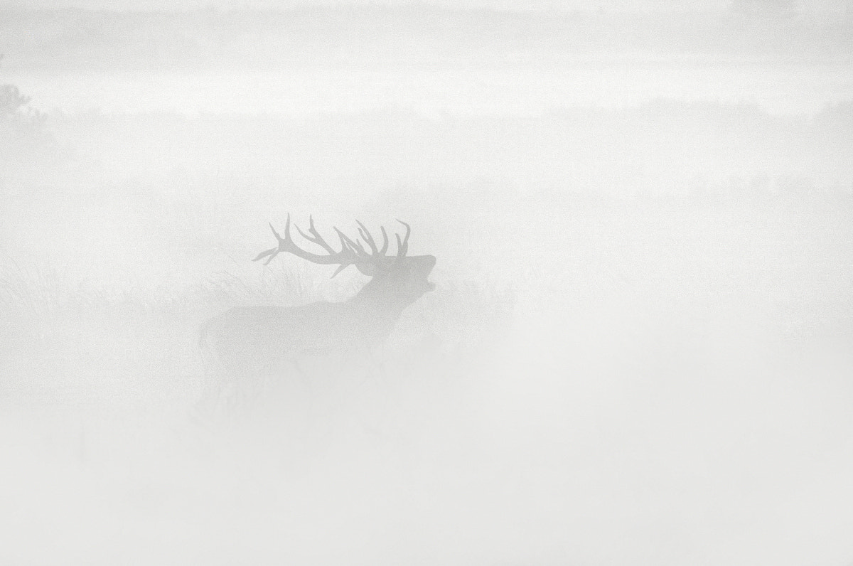 Photograph Fog Deer by B Timmer on 500px
