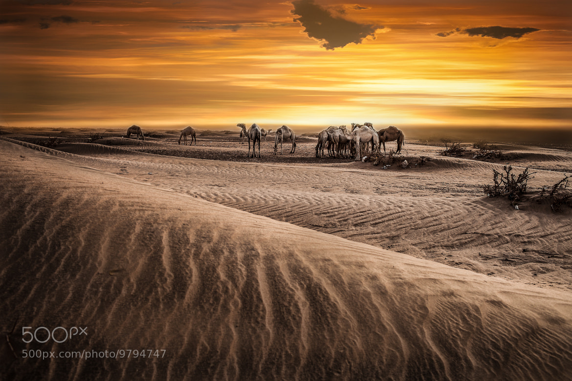 Photograph Deserts fo Kuwait by Kyle Stanley on 500px