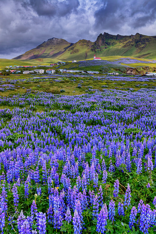 Photograph The Fields of Vik by Aubrey Stoll on 500px