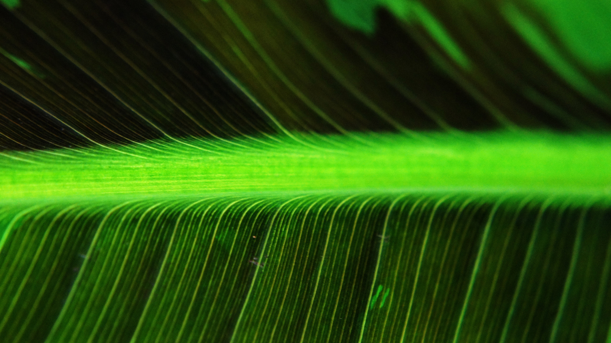 Photograph Green line by Hiwa  on 500px