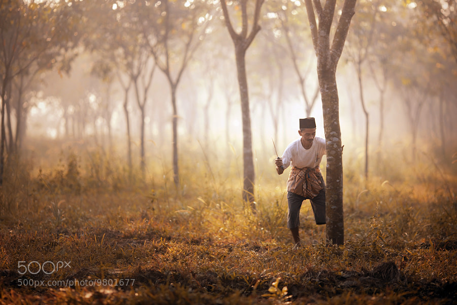 Photograph illegal logging by asit  on 500px