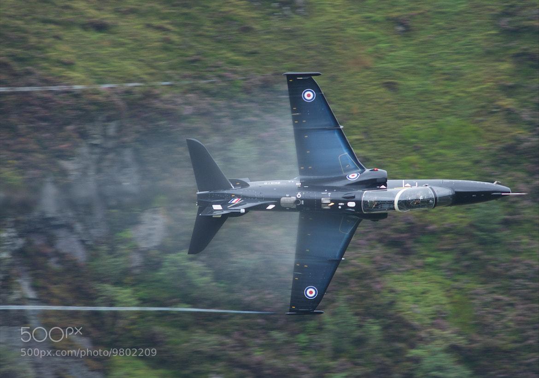 Photograph Hawk by Jon Pym on 500px