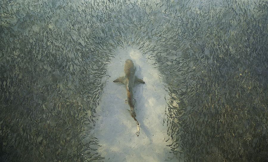 Photograph The Parting of the Feast by Scott Carr on 500px