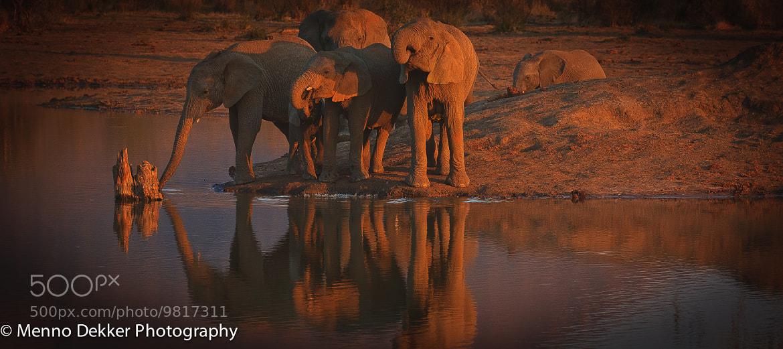 Photograph Elephant reflections by Menno Dekker on 500px