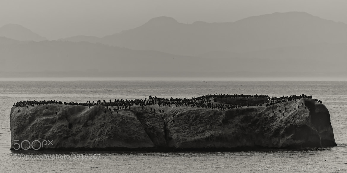 Photograph Cormorants, Cape of Good Hope by Vince O'Sullivan on 500px