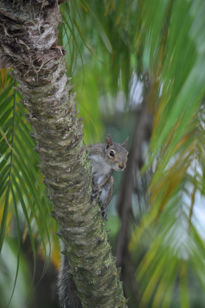 Photograph Hide n Seek Squirrel by Vivian Barrios Photography on 500px