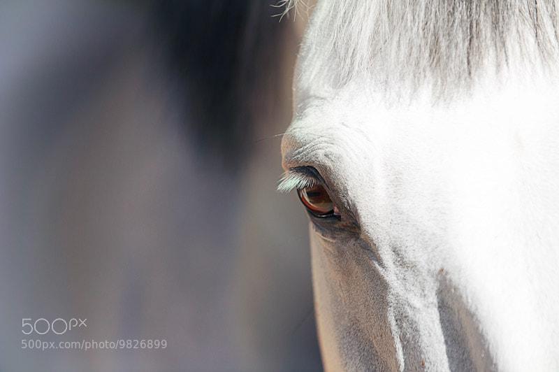 Photograph  Power of the eye by Abdul Ghani Alzahrani on 500px