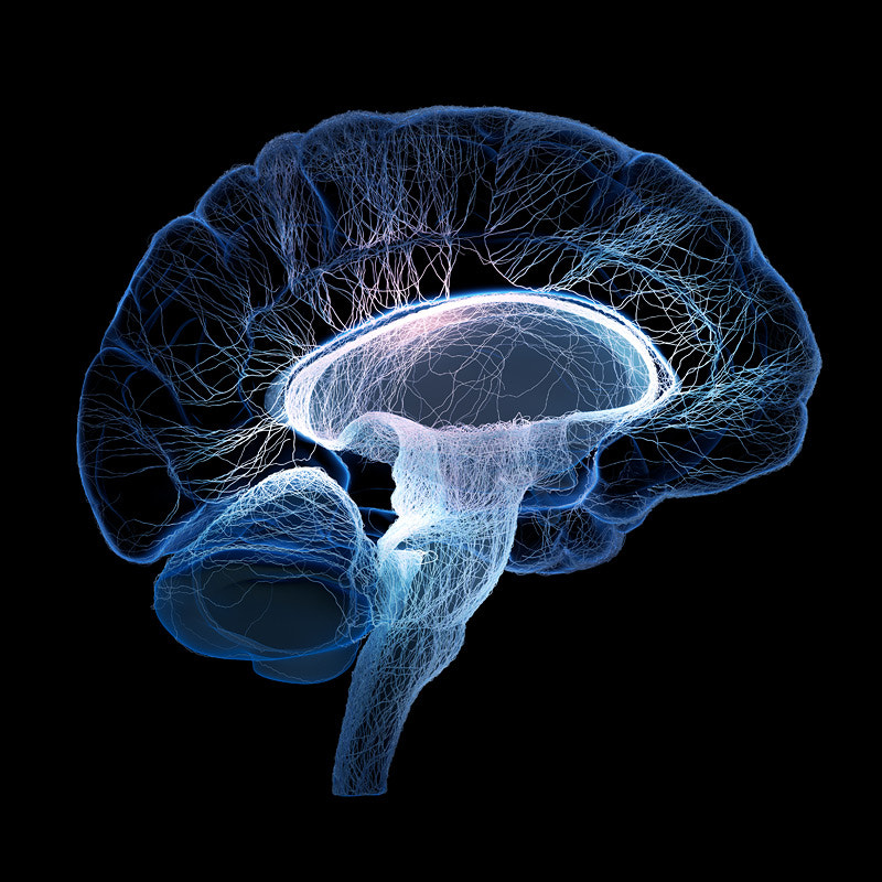 Human Brains Human Brain Illustrated With Interconnected Small Nerves by Johan Swanepoel