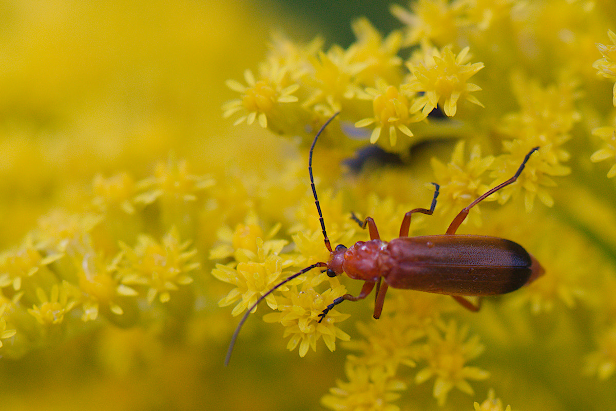 Photograph Red bug in yellow heaven by Gerhard Müller on 500px