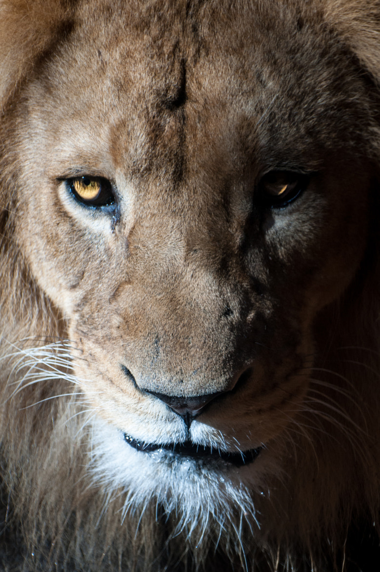 Photograph Portait of a King by Michael Sherwood on 500px