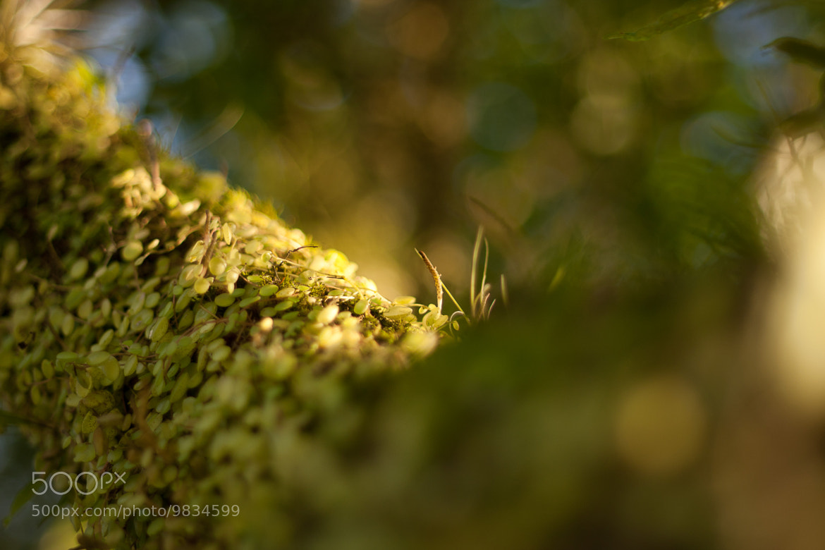 Photograph Green by Luiz Feliponi on 500px