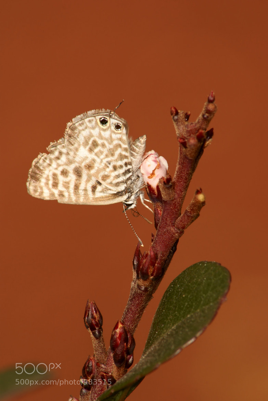 Photograph Butterfly by Johannes Christoffel Meintjes on 500px