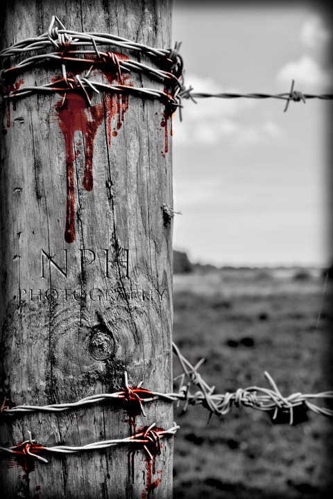 Photograph Barbed by NHBEY42  on 500px