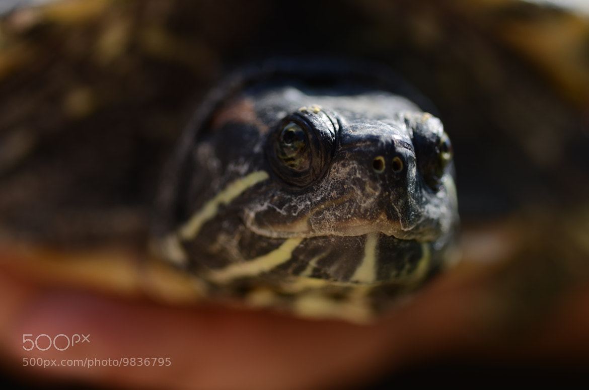 Photograph turtle by Evgeniy Batsaev on 500px
