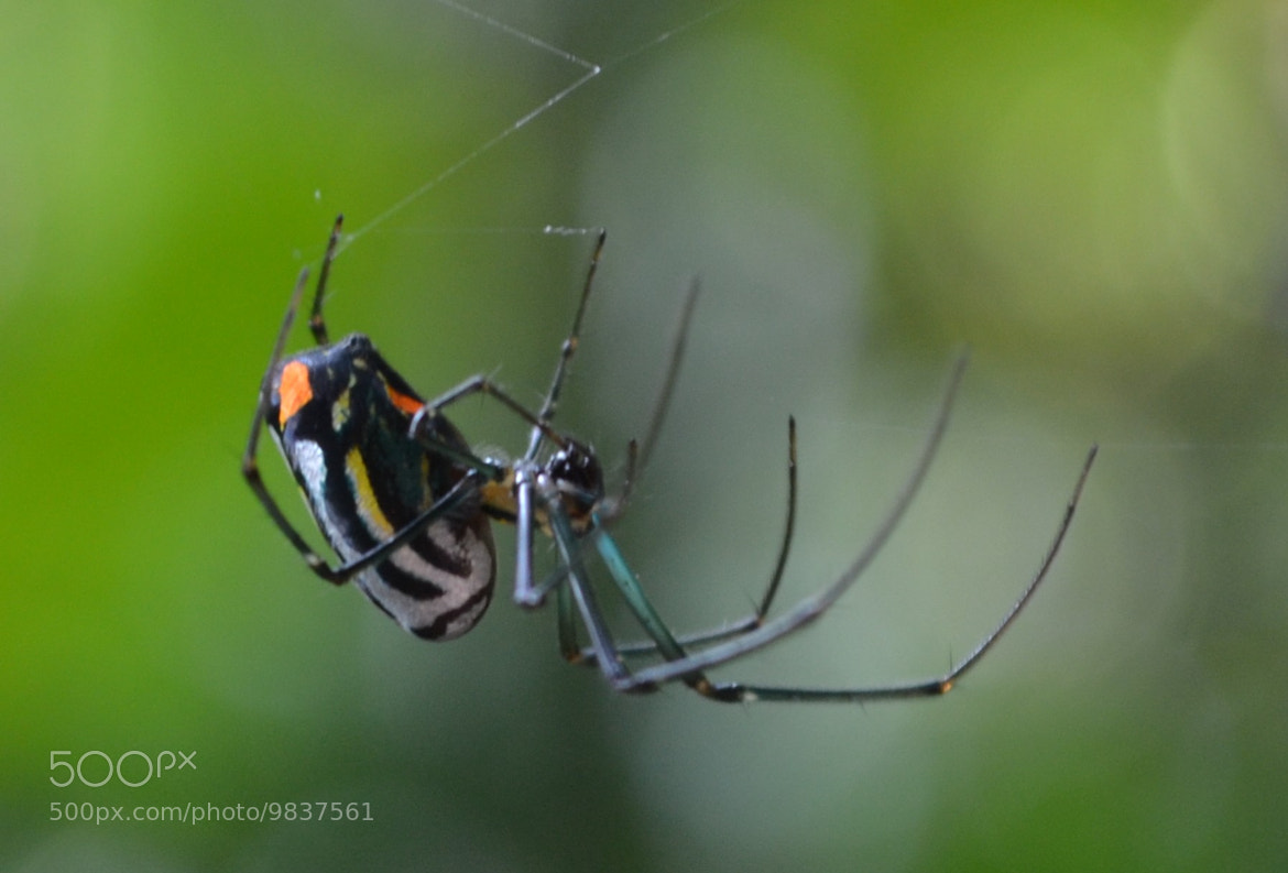 Photograph Spider by Valquíria Teixeira on 500px
