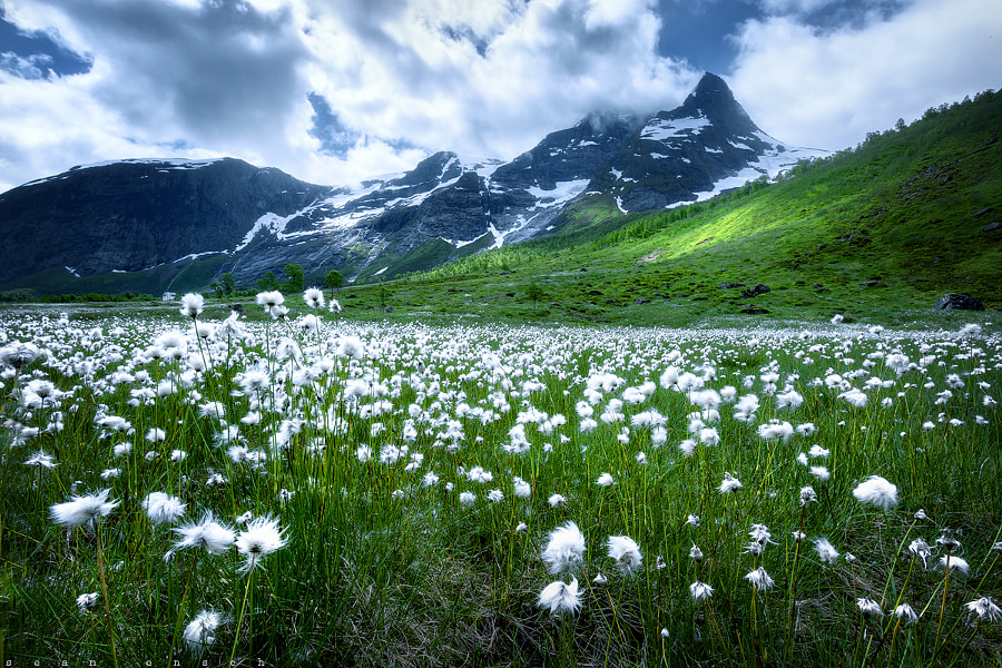 Photograph ERIOPHORUM by Sean Ensch on 500px
