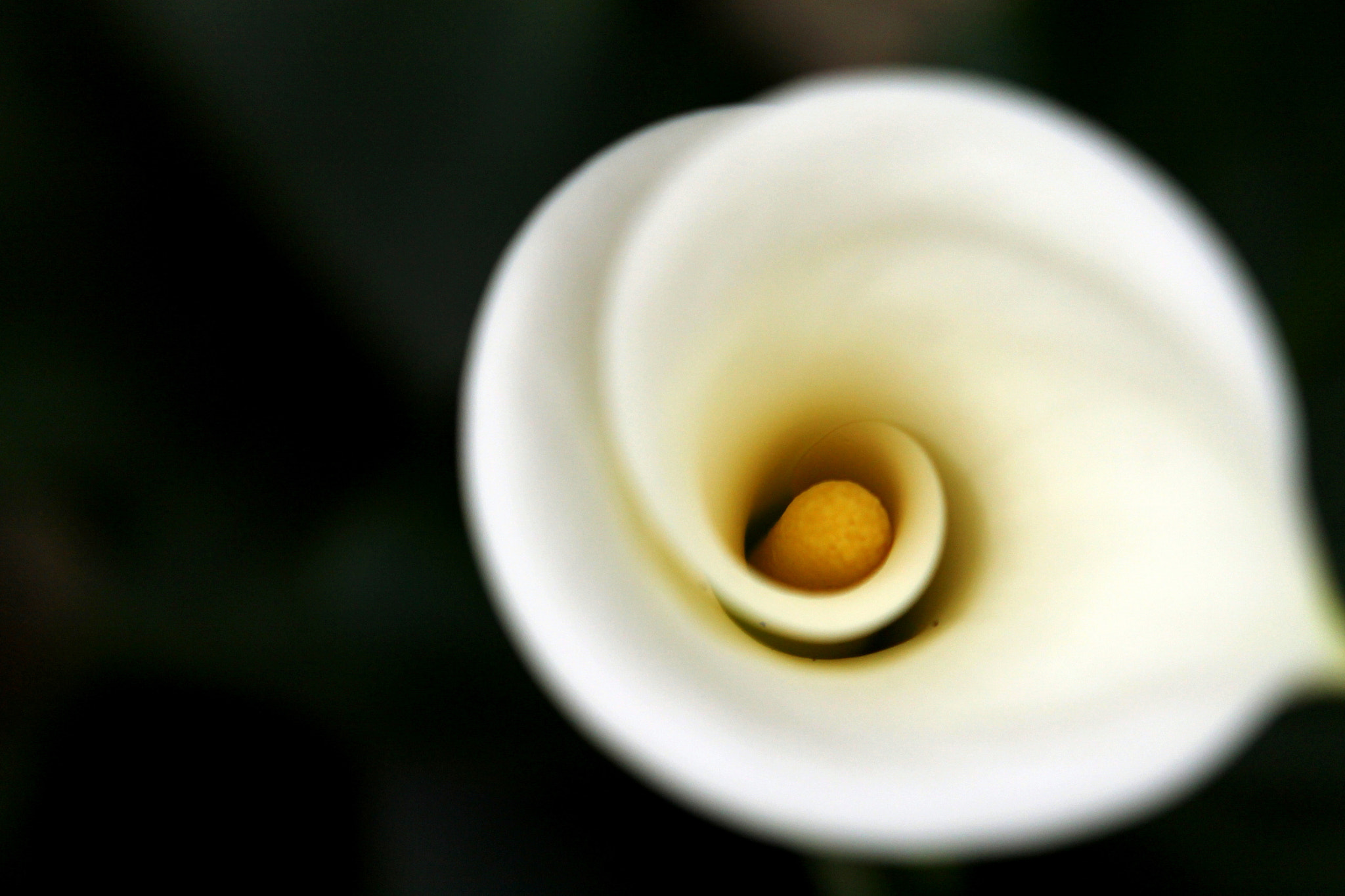 Photograph White Flower by Monique K. on 500px