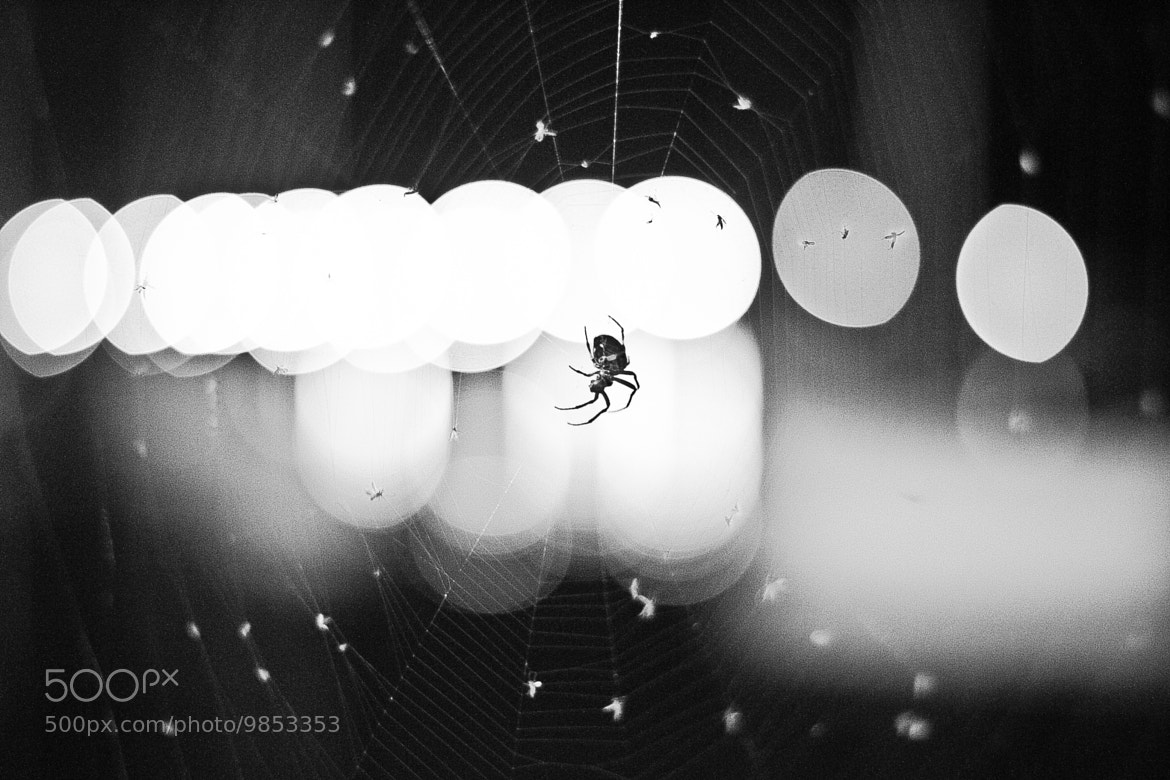 Photograph Bokeh Spider by Brian Buckler on 500px