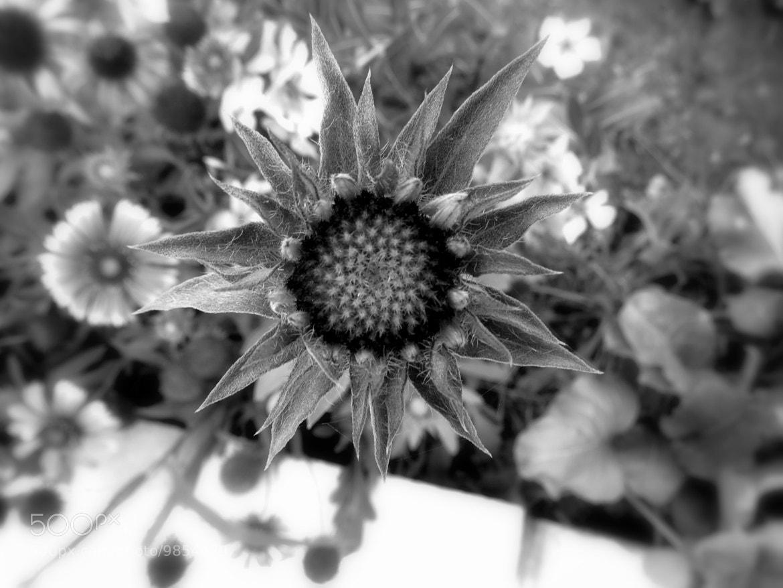 Photograph like a sun by Milad Ghasemi on 500px