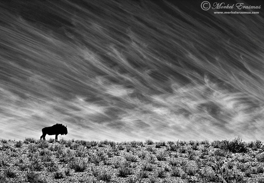 Photograph Desert Survivor by Morkel Erasmus on 500px