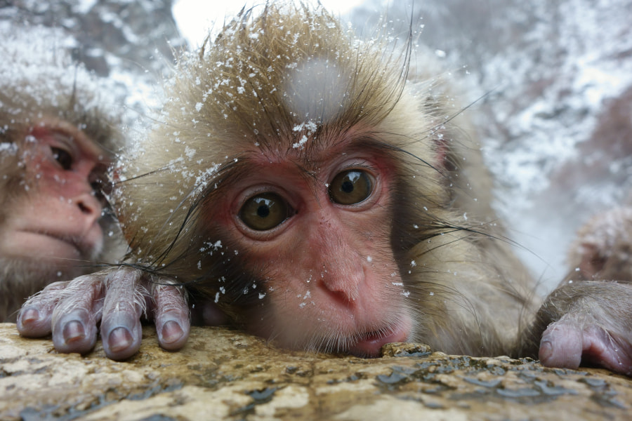 Hot spring feels really good by Masashi Mochida on 500px.com