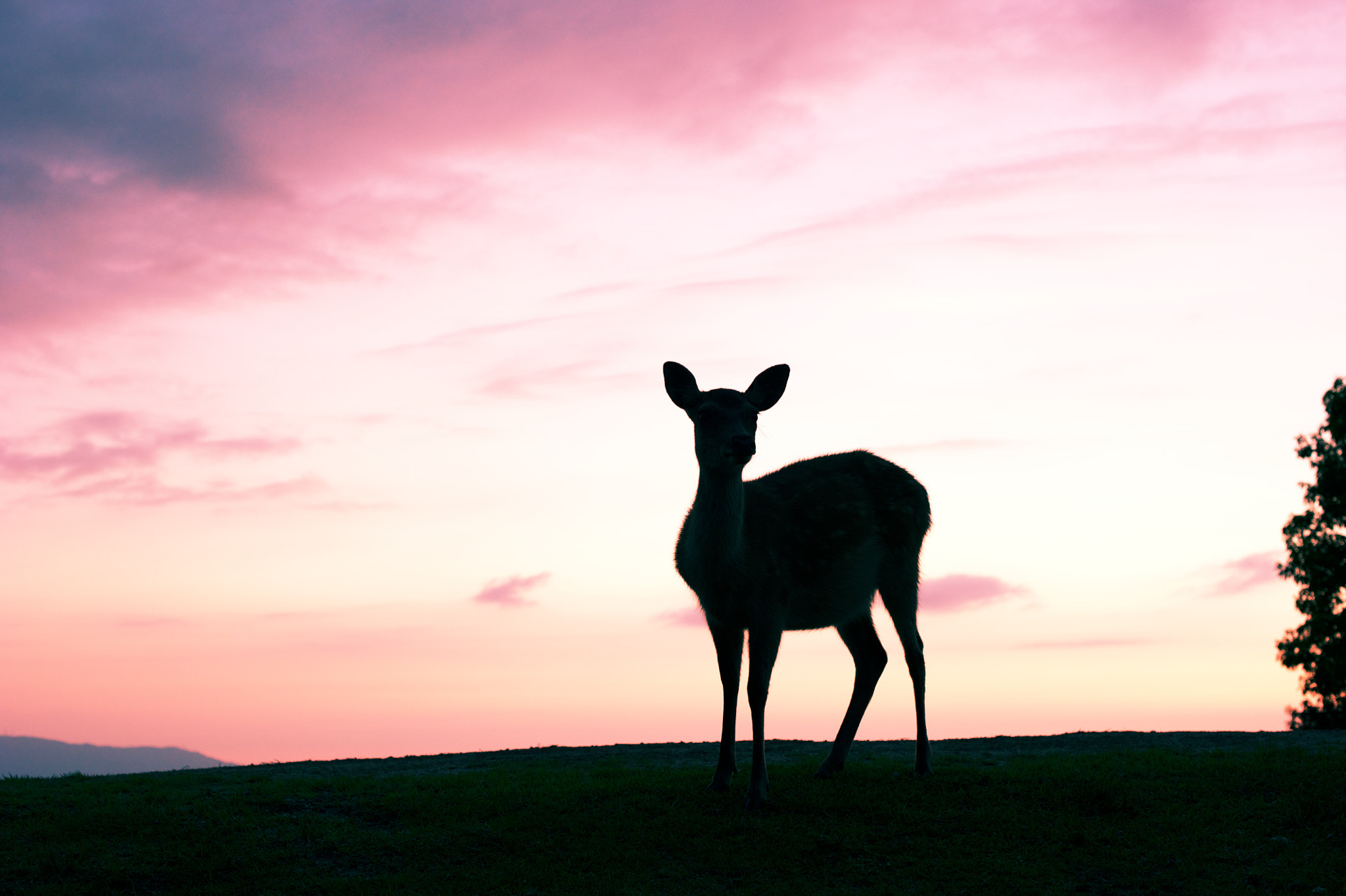 Photograph Deer(Sunset) by ball1515  on 500px