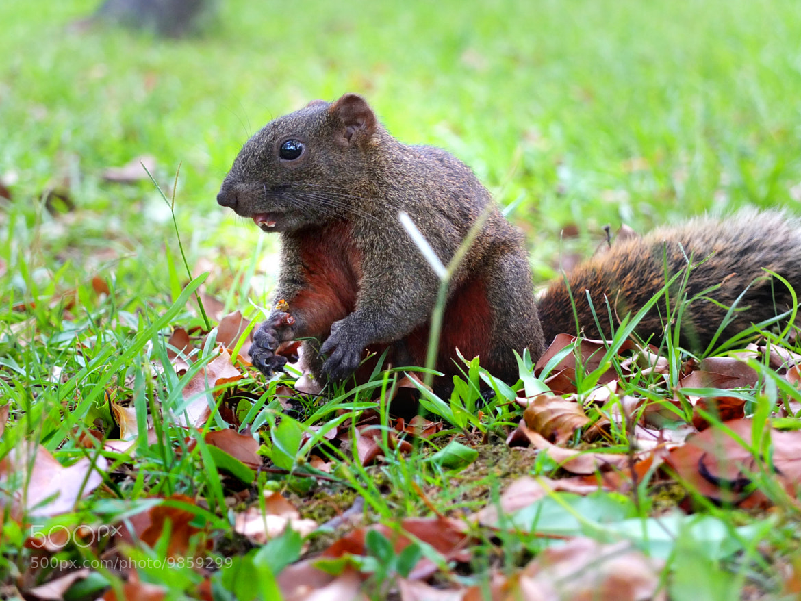 Photograph Squirrel chewing by Emily C on 500px