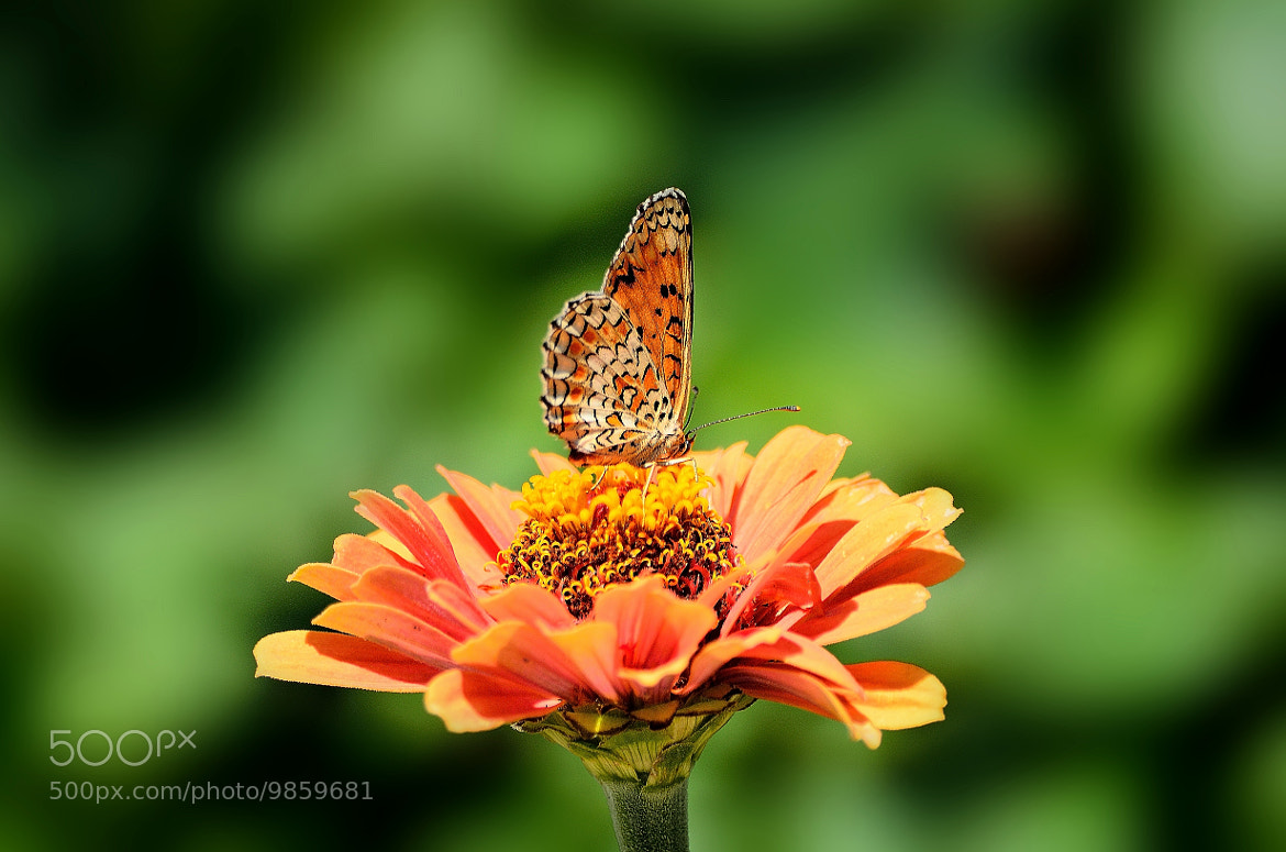 Photograph Kelebek - Butterfly by Ismail Tozan on 500px