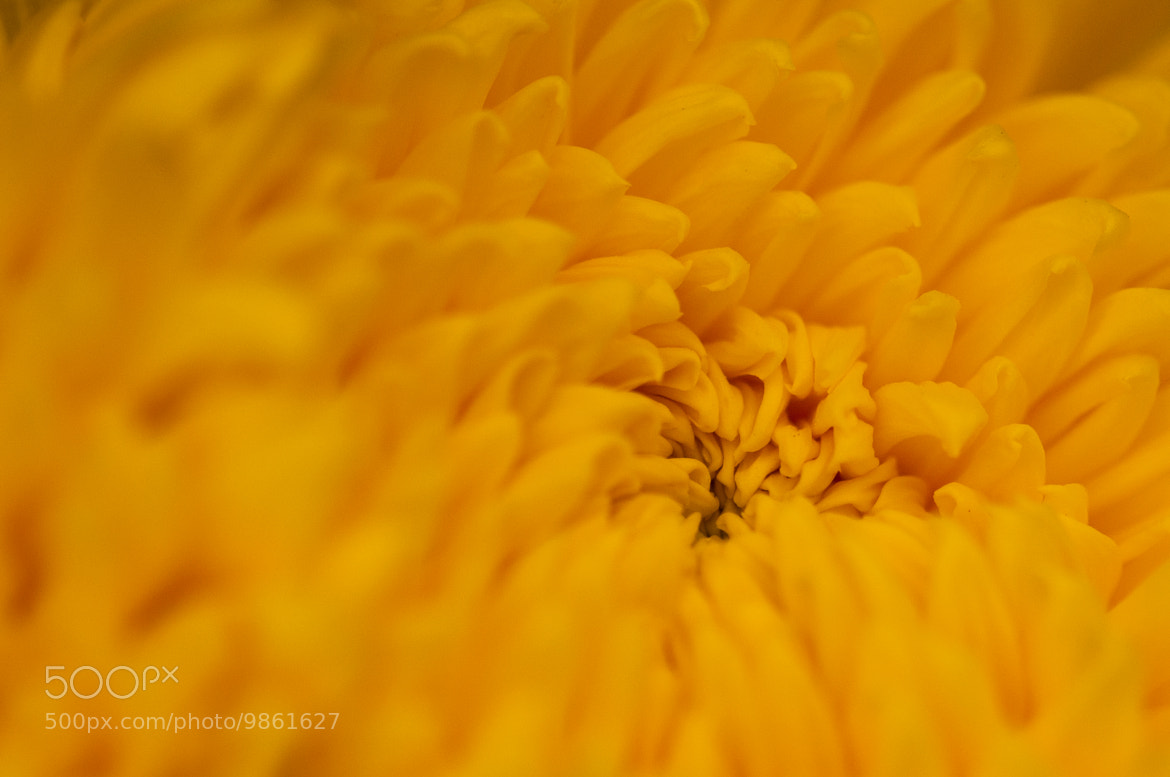 Photograph Deep Yellow by Bashar H on 500px