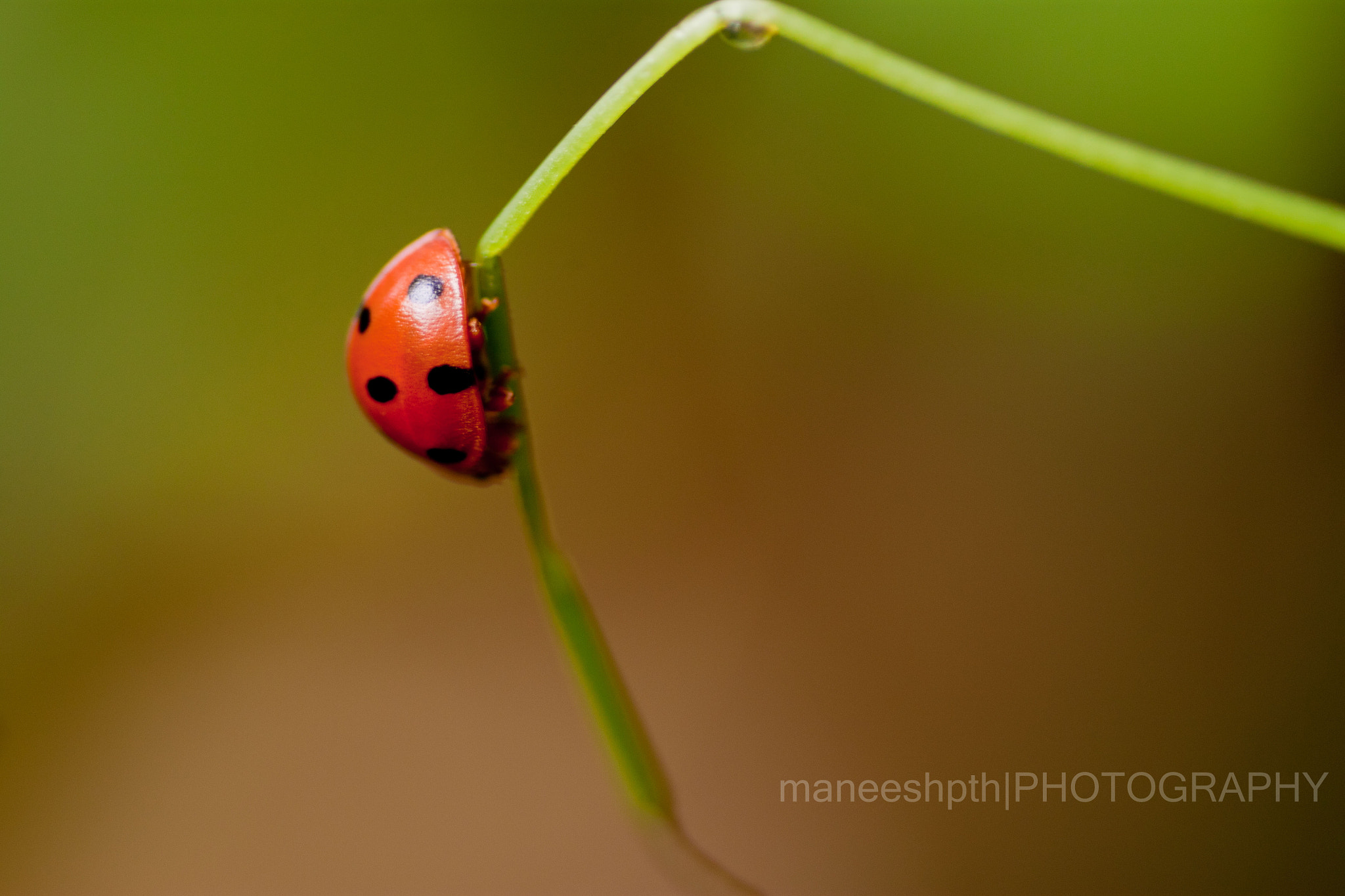 Photograph tiny world... by maneesh p on 500px