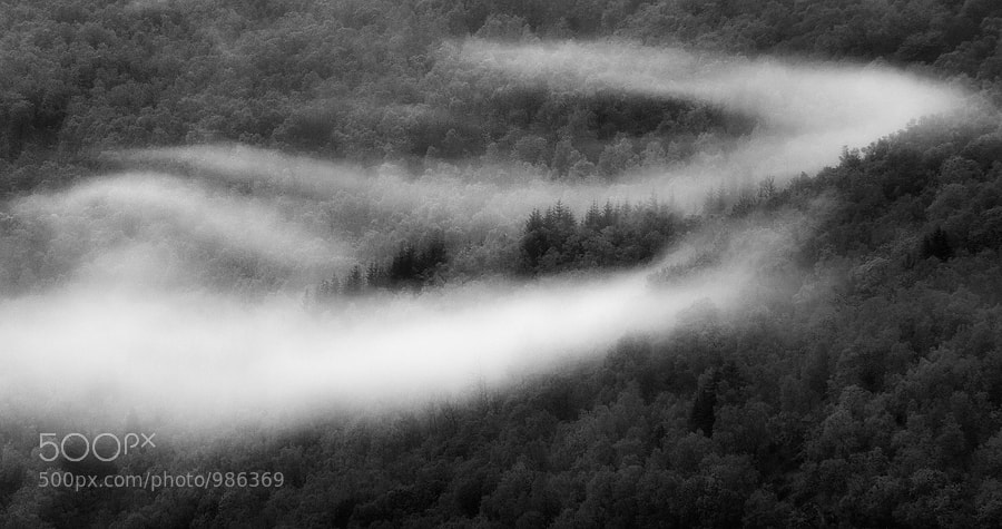 Photograph Misty Woods by Arild Heitmann on 500px