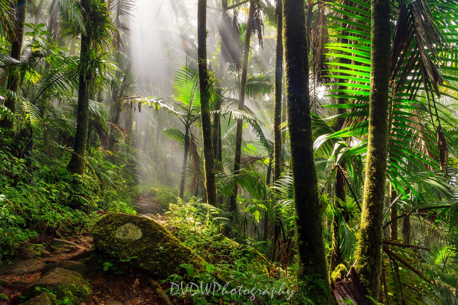 Photograph The El Yunque Rain Forest by Dennis van de Water on 500px