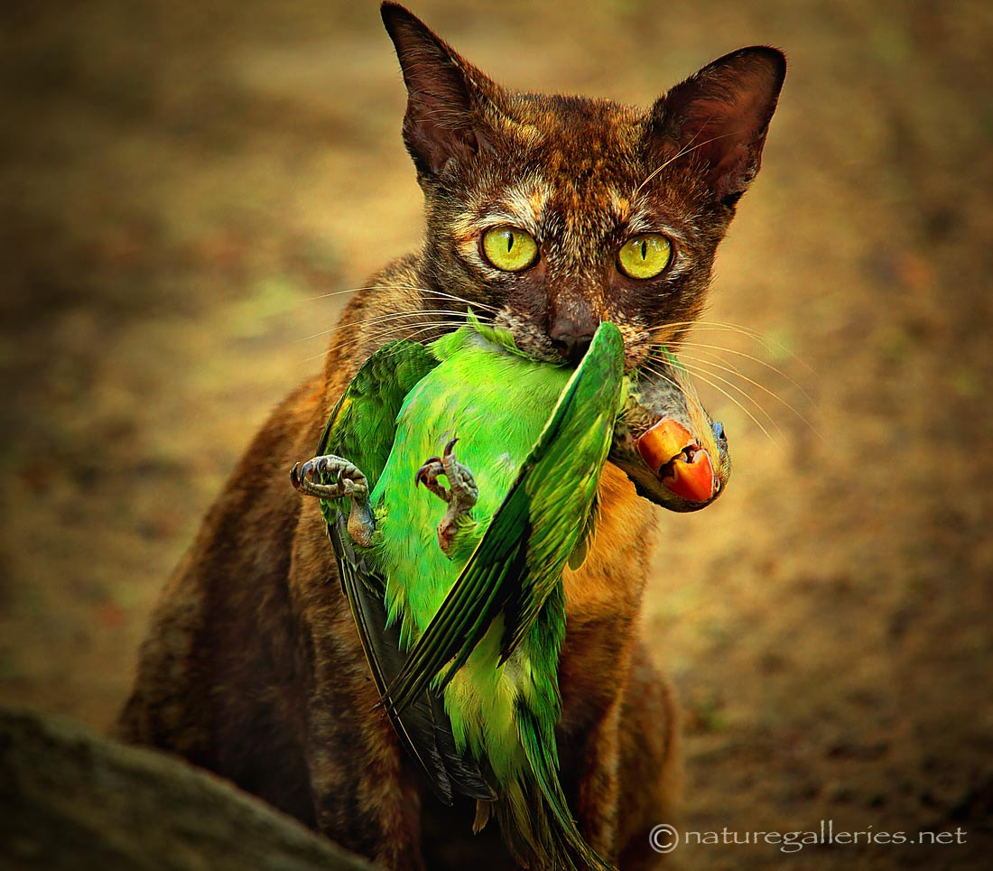 Photograph bird and cat by Sasi - smit on 500px