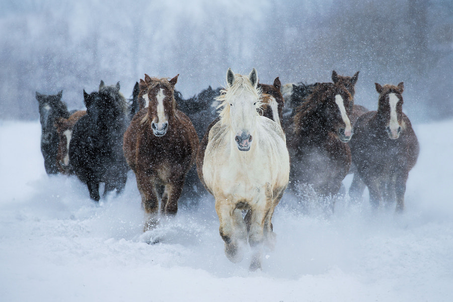 Running in winter by Satoru Kobayashi on 500px.com