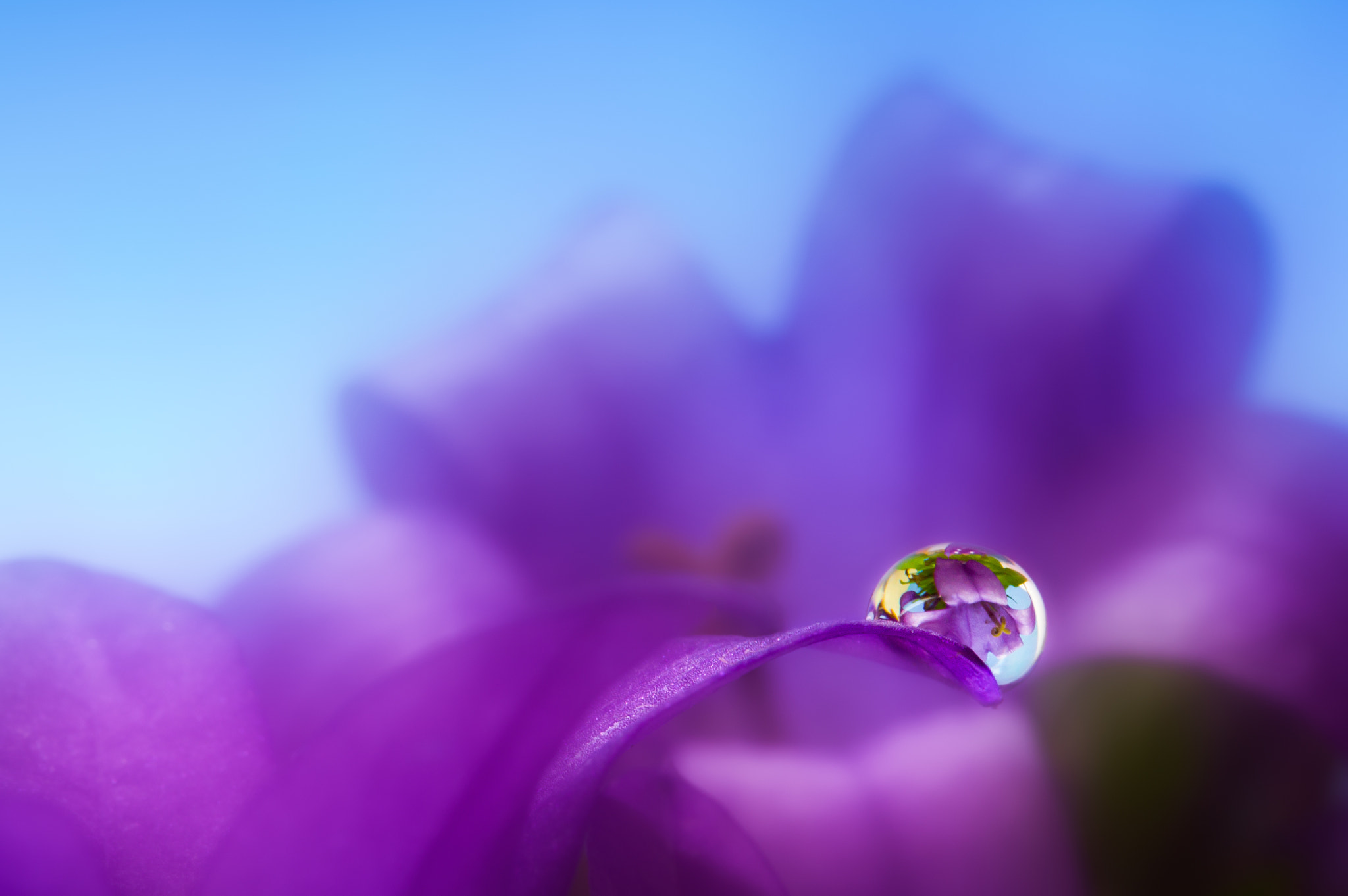 Photograph Flower in drop by Miki Asai on 500px