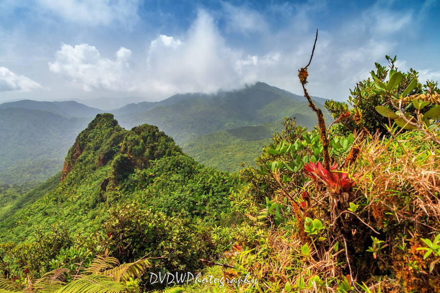 Photograph El Yunque panorama by Dennis van de Water on 500px
