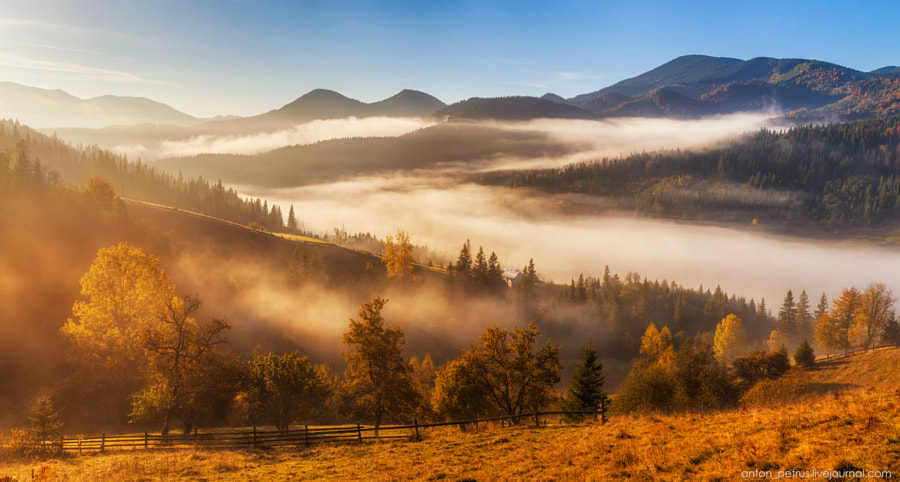 Autumn Gold by Anton Petrus on 500px.com