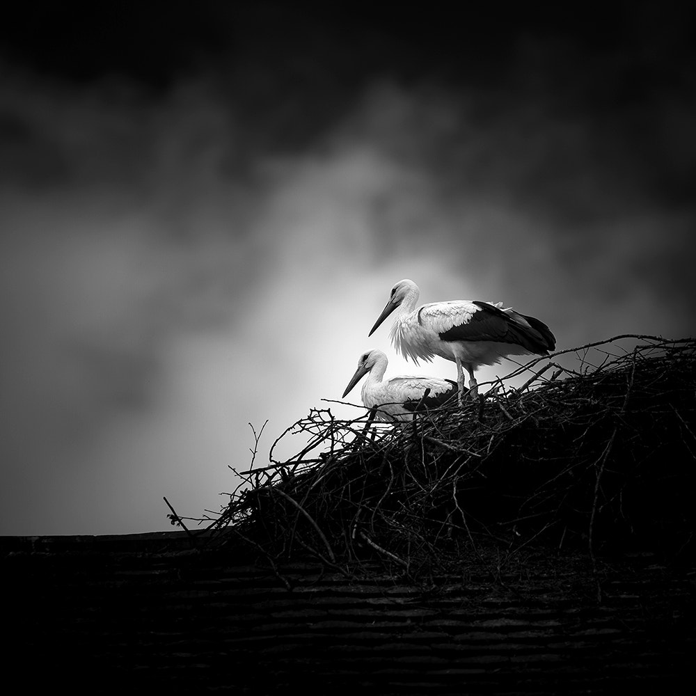 Photograph s t o r k s by Lothar Adamczyk on 500px