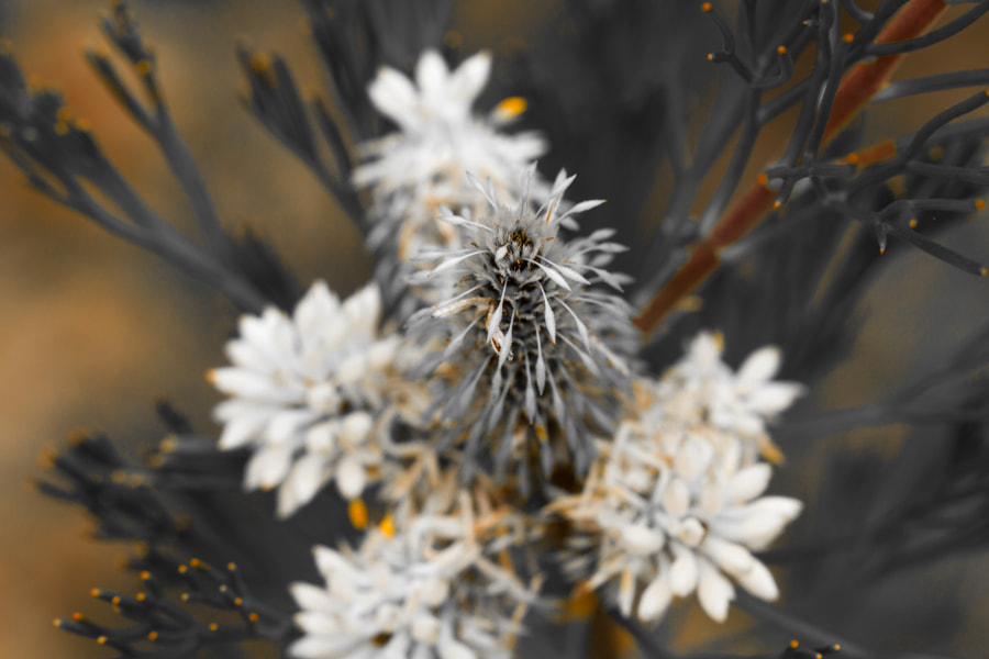 Photograph White Wild Flower by Travis Chau on 500px