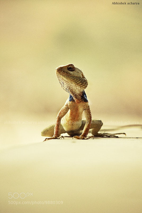 Photograph smile plz  by abhishek Acharya on 500px