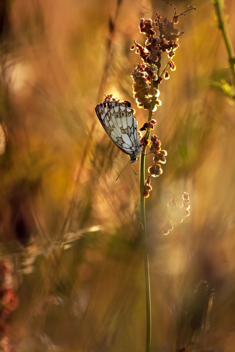 Photograph ♥ wonderworld and butterfly ♥ by Yohanna Del'heaumeau on 500px