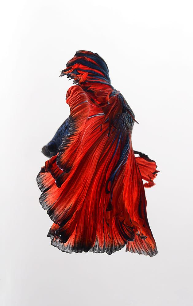 Red Cloak By Visarute Angkatavanich / 500px