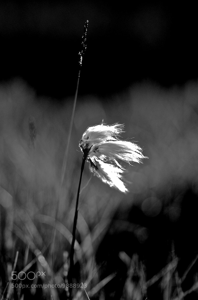 Photograph Flax in B&W by Craig MacLeod on 500px