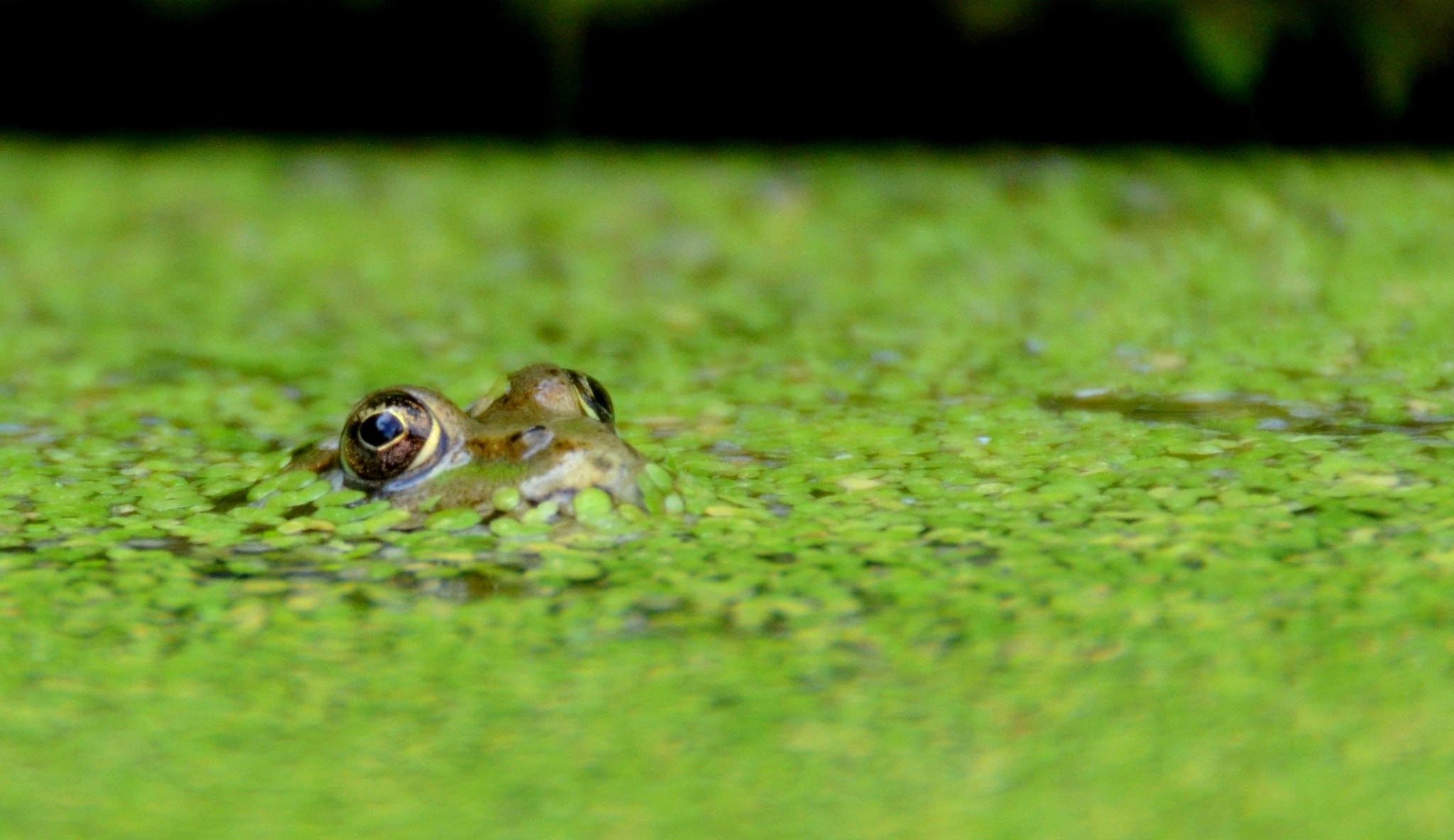 Photograph Frog by Marjolaine Roux on 500px