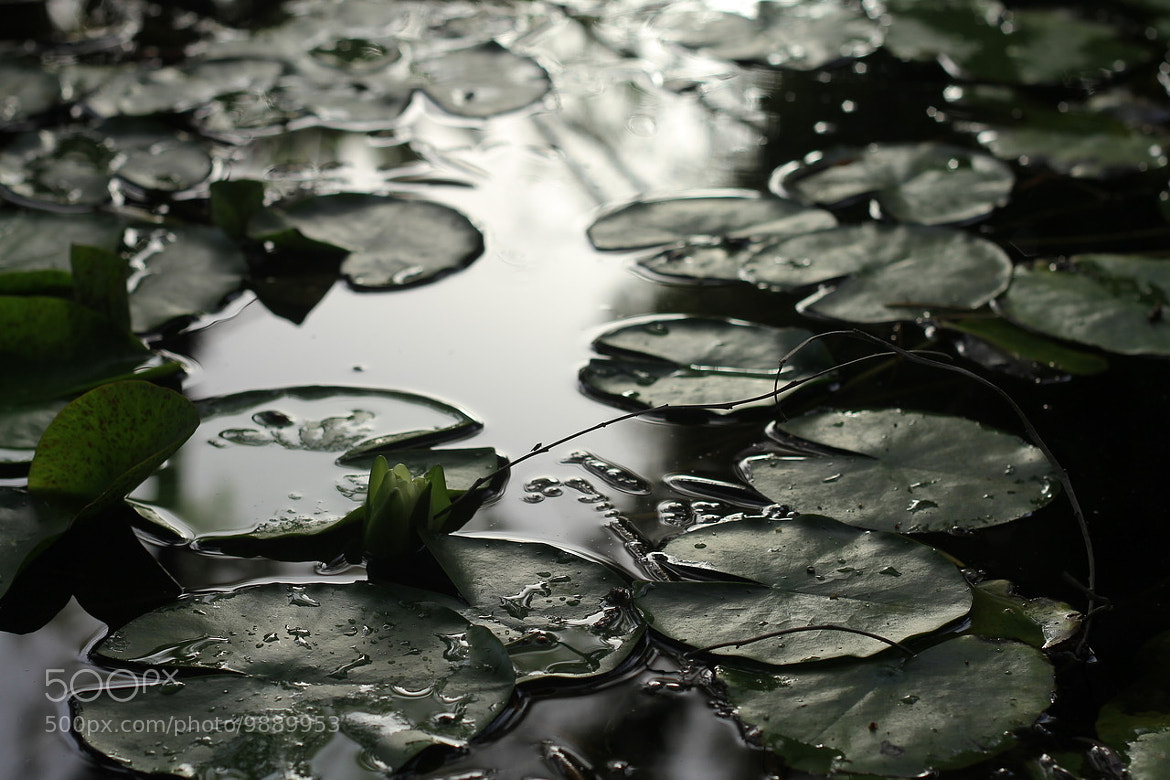 Photograph Leaves by Azeez  G ~ on 500px